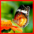 Butterfly Memory Game file APK Free for PC, smart TV Download