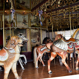 Vintage Carousel by Deborah Lucia - Artistic Objects Other Objects ( musical, painted_horses, carousel )
