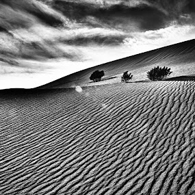 Tres Amigos En La Playa by Preston Trauscht - Landscapes Deserts ( sand, desert, death, friendship, eternity )