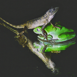 Make friends not war by Sigit Purnomo - Animals Amphibians