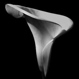 by Clare Draper - Black & White Flowers & Plants