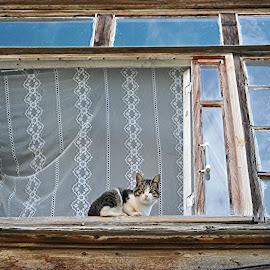 Kitten. by Miro Trimay - Animals - Cats Kittens ( old house, home, cat, kitten, window, still life )