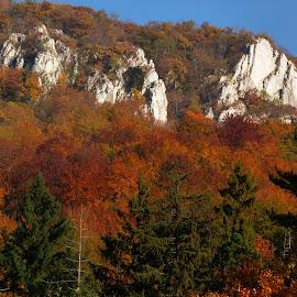 by Jenő Murányi - Landscapes Mountains & Hills ( autumn, forest, rocks, montain )