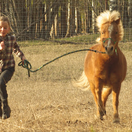 Let's go! by Giselle Pierce - Babies & Children Children Candids ( miniature horse, little girl, friends, girl, leading, horse, running )