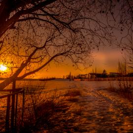 Twin Brook City Park by Joseph Law - City,  Street & Park  City Parks ( winter, snow, neighborhood, trees, twin brook, sunshine, edmonton, city park, evening, gate )