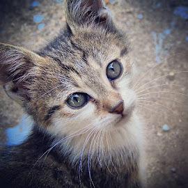 by Ivan Bajčić - Animals - Cats Kittens