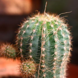 Cactus by Gee Emm - Nature Up Close Other plants ( garden )
