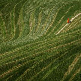 Path of wisdom by Vyacheslav Beluha - Landscapes Travel ( longji, travel photography, guilin, jinkeng, rice terrace, dazhai, rice field, monk, travel, scenery, rice,  )