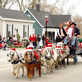 Pony Power by Jenny Gandert - Public Holidays Christmas