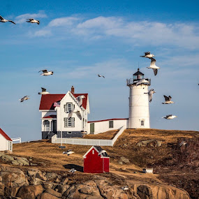 Nubble Light by Rob King - Buildings & Architecture Public & Historical ( red, nubble, blue, white, lighthouse, ocean, seascape, rocks, sea gull )