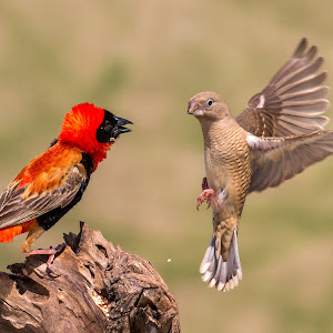 COLOR BIRDS-193.jpg