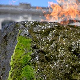 moss fire by Rachel Urlich - Abstract Fire & Fireworks ( green, moss, stone, grey, rock, black, fire )