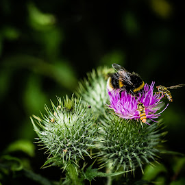 Natures Bounty  by Ethan Jacobs - Nature Up Close Other Natural Objects ( thistle, nature, bee, plants, nature up close,  )