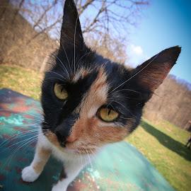 Fun cat by Nikola Jordanov - Animals - Cats Portraits ( cat, street )