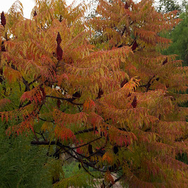 autumn is here by LADOCKi Elvira - Nature Up Close Trees & Bushes