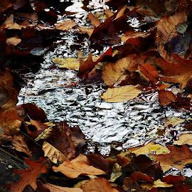 Autumn by Karel Šula - Uncategorized All Uncategorized ( autumn colors )