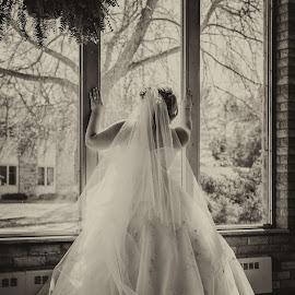 Gazing Bride by Tim Faust - Wedding Bride ( bridal, dress, wedding, gown, bride )