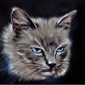 My Cat by Daliana Pacuraru - Drawing All Drawing ( pastel, cat, daliana pacuraru, blue, drawing, portrait, eyes )