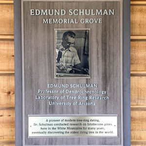 Edmund Schulman Professor of Dendrochronology  A pioneer of modern tree-ring dating, Dr. Schulman conducted research on bristlecone pines here in the White Mountains for many years, eventually ...