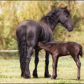 with mom by Jana Vondráčková - Animals Horses