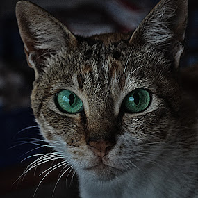Miawwwwwww by Yosh Ginsu - Animals - Cats Portraits