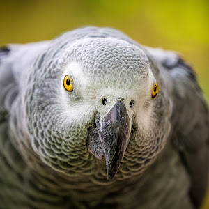 Zoo Bird Portrait.jpg