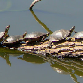 Formation by Kathleen  Gearhart - Animals Amphibians