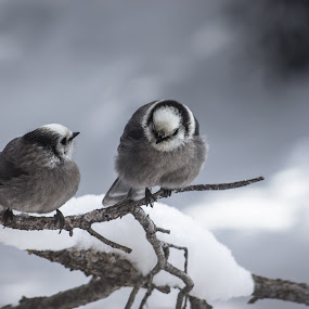 Birds 2 by Hunter Bryant - Novices Only Wildlife ( winter, snow, birds )