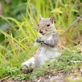 Breakfast  by Elaine Grimes - Animals Other ( squirrel )
