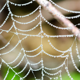 Spider web covered in gem like rain drops by Wilma Michel - Nature Up Close Webs