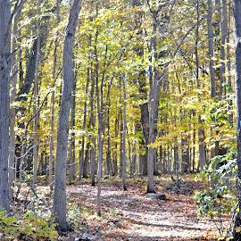 Autumn by Jaliya Rasaputra - Nature Up Close Trees & Bushes