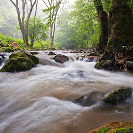 by Siniša Almaši - Nature Up Close Water ( water, up close, stream, stone, forest, landscape, woods, depth, tree, nature, fog, cascade, view, rocks, light, river, mist )