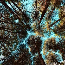 Looking up :) by Vera Vilela - Nature Up Close Trees & Bushes (  )