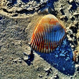 by Kim Watkins - Nature Up Close Sand