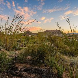 Desert Beauty by Ralph Resch - Landscapes Deserts ( desert, arizaon )