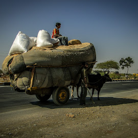 Transportation in rural India by Karin Wollina - Transportation Roads ( transport, rajasthan, street, rural, animal,  )