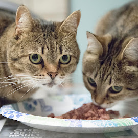 Two House Cats by Ginger Wlasuk - Animals - Cats Portraits ( cats, cat eyes, cat food, feeding, eyes )