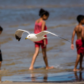 Beach Scene by Dave Lipchen - Animals Birds ( flying, three kids, children, beach, ring-billed gull )
