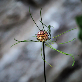 by Darrell Tenpenny - Nature Up Close Other plants