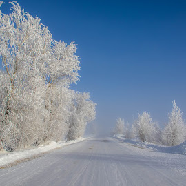 On the Frosty Road by Chad Roberts - Landscapes Prairies, Meadows & Fields ( blue skies and frosty trees on a very cold day,  )