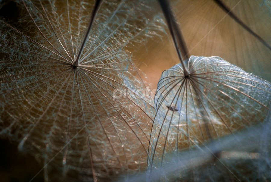 Umbrellas Above by Melissa S. Hunt - Abstract Fine Art ( abstract, macro, nature, fuzzy, other plants, fine art, shapes )