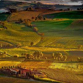 Tuscany by Stanley P. - Landscapes Prairies, Meadows & Fields (  )