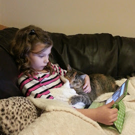 Lily and anna by Kerrie Bosson - Animals - Cats Kittens ( kitten, cuddles, family, tabby, cute )
