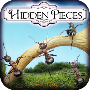Hidden Pieces: Ant Farm