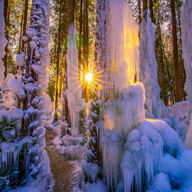 Sunset in Frozen Forest,Eispalast, Schwarzsee Switzerland by Kitty Bern - Landscapes Sunsets & Sunrises ( winter, cold, sunset, ice, switzerland )