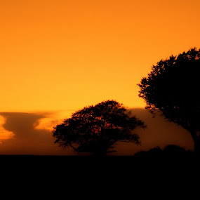 Africa or Lincolnshire? by Suzanna Nagy - Landscapes Sunsets & Sunrises ( pwcotherworldly )