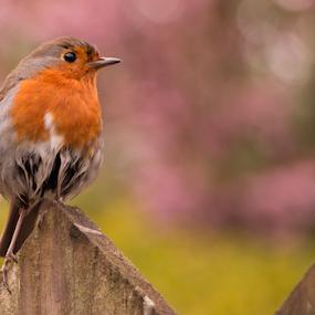 by Jimi Neilson - Animals Birds