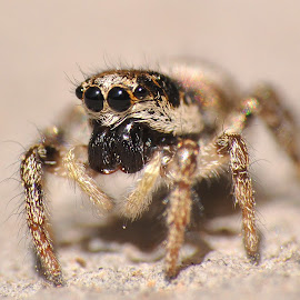 by Ivan Marjanovic - Animals Insects & Spiders