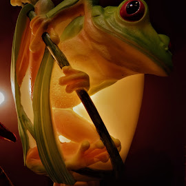 Glass frog by Denise O'Hern - Artistic Objects Other Objects ( acrylic night light. )