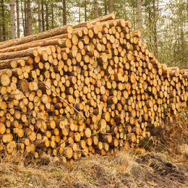 log pile by Judith Matthews - Nature Up Close Trees & Bushes ( circles, stacked, wood, trees, pile, forest, landscape )
